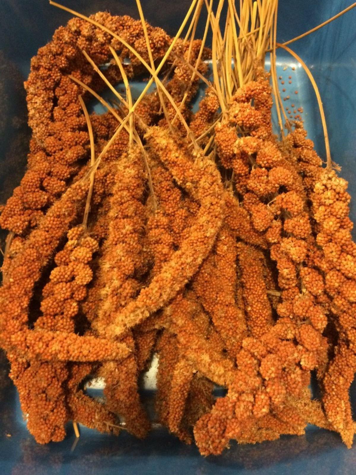 Senegalese millet 1kg